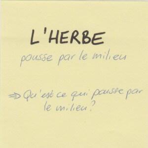 12_Herbe